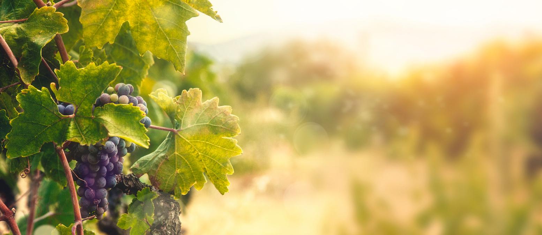 Jesus, the Vine: Part 4